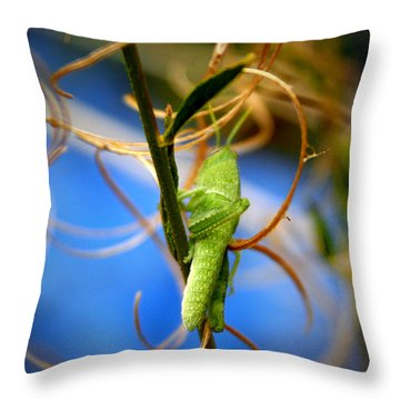 Grassy Hopper Throw Pillow by Chris Brannen