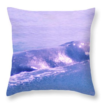 Gray Whale  Throw Pillow by Jeff Swan