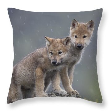 Gray Wolf Canis Lupus Pups In Light Throw Pillow by Tim Fitzharris