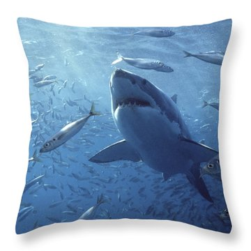 Great White Shark Carcharodon Throw Pillow by Mike Parry