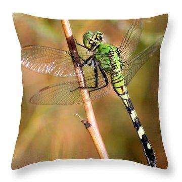 Green Dragonfly Closeup Throw Pillow by Carol Groenen