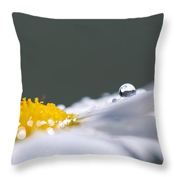 Grey And Yellow Daisy Throw Pillow by Lisa Knechtel