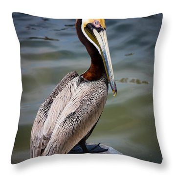 Grey Pelican Throw Pillow by Inge Johnsson