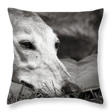 Greyful Throw Pillow by Angela Rath