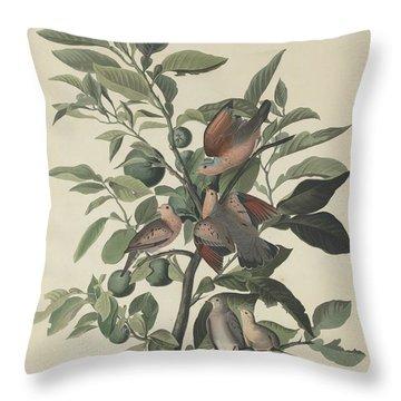 Ground Dove Throw Pillow by John James Audubon
