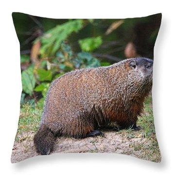 Groundhog  0590 Throw Pillow by Jack Schultz