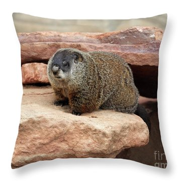 Groundhog Throw Pillow by Louise Heusinkveld