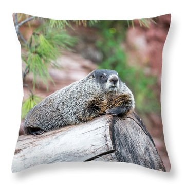 Groundhog On A Log Throw Pillow by Jess Kraft