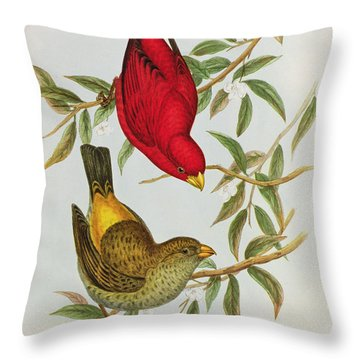 Haematospiza Sipahi Throw Pillow by John Gould