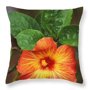 Hibiscus Throw Pillow by Allan Seiden - Printscapes