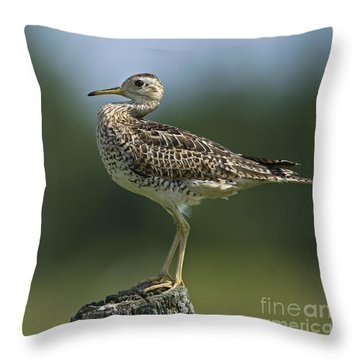 Hieroglyphic Sandpiper... Throw Pillow by Nina Stavlund