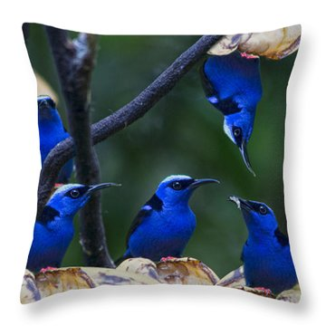 Honeycreeper Throw Pillow by Betsy Knapp