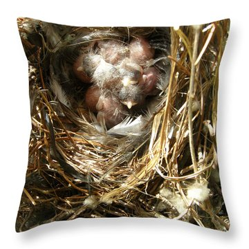 House Wren Family Throw Pillow by Angie Rea