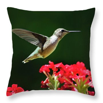 Hovering Hummingbird Throw Pillow by Christina Rollo