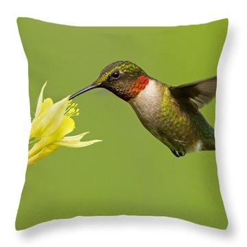 Hummingbird Throw Pillow by Mircea Costina Photography