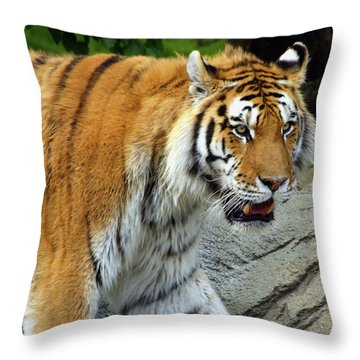 Hungry Cat Throw Pillow by Gordon Dean II