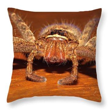 Huntsman Spider Throw Pillow by Joerg Lingnau
