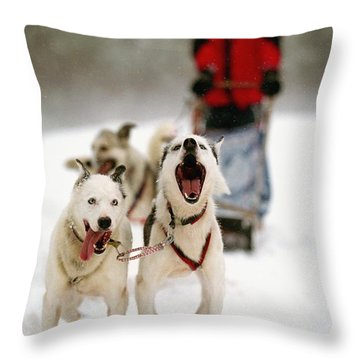 Husky Dog Racing Throw Pillow by Axiom Photographic