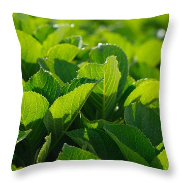 Hydrangea Foliage Throw Pillow by Gaspar Avila