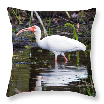 Ibis Drink Throw Pillow by Mike Dawson