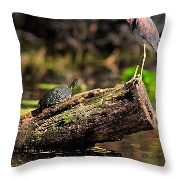 Immature Tri-colored Heron And Peninsula Cooter Turtle Throw Pillow by Matt Suess
