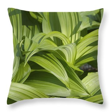 Indian Poke - Veratrum Veride-  Throw Pillow by Erin Paul Donovan