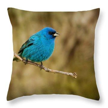 Indigo Bunting Bird Throw Pillow by Chad Davis