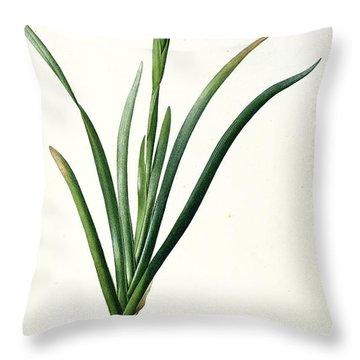 Iris Luxiana Throw Pillow by Pierre Joseph  Redoute