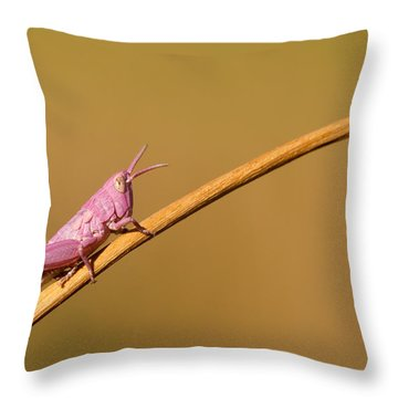 It's Not Easy Being Pink Throw Pillow by Roeselien Raimond