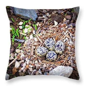 Killdeer Nest Throw Pillow by Cricket Hackmann