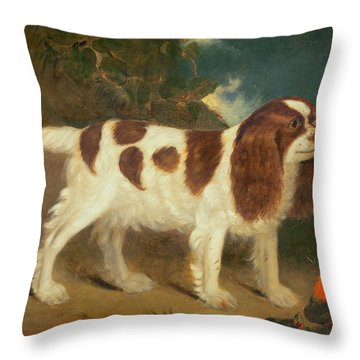King Charles Spaniel Throw Pillow by William Thompson