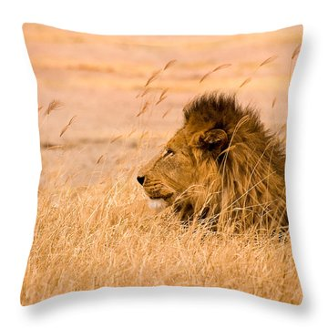 King Of The Pride Throw Pillow by Adam Romanowicz