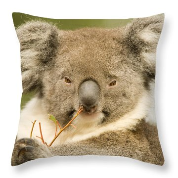 Koala Snack Throw Pillow by Mike  Dawson