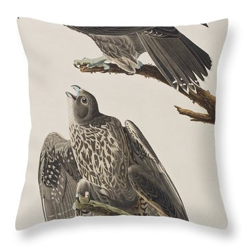 Labrador Falcon Throw Pillow by John James Audubon