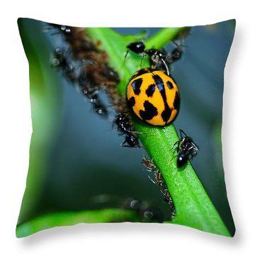 Ladybird And The Ants 2 By Kaye Menner Throw Pillow by Kaye Menner