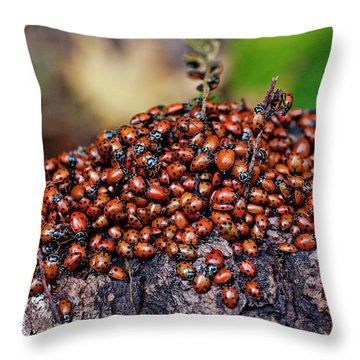 Ladybugs On Branch Throw Pillow by Garry Gay