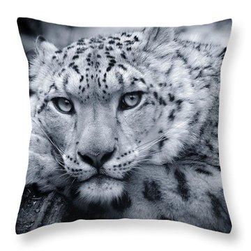 Large Snow Leopard Portrait Throw Pillow by Chris Boulton
