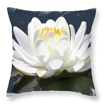 Large Water Lily With White Border Throw Pillow by Carol Groenen