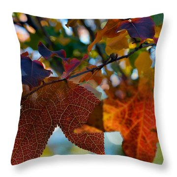 Late Autumn Colors Throw Pillow by Stephen Anderson