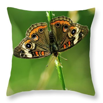 Lepidoptera Throw Pillow by Charles Dobbs