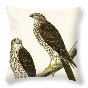 Levant Sparrow Hawk Throw Pillow by English School