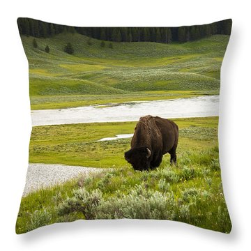 Lonely Bison Valley Throw Pillow by Chad Davis