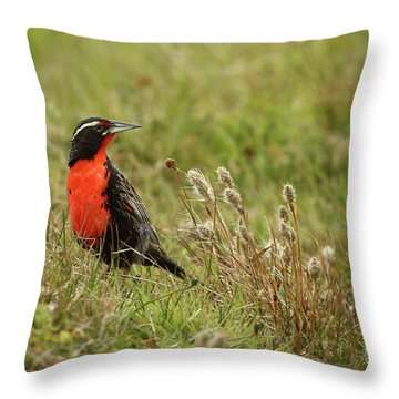 Long-tailed Meadowlark Throw Pillow by Bruce J Robinson