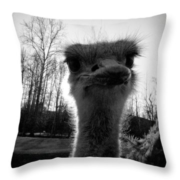 Look At Me Now Throw Pillow by Jessica Brawley