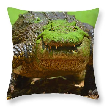 Looking For Lunch Throw Pillow by Tony Beck
