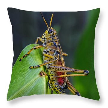 Lubber Grasshopper Throw Pillow by Richard Rizzo