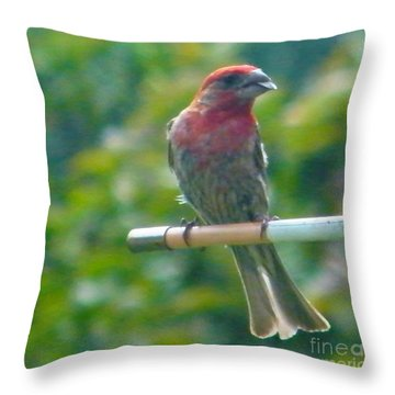 Male Crossbill With Sunflower Seed    August  Indiana Throw Pillow by Rory Cubel