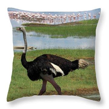 Male Ostrich Throw Pillow by Aidan Moran
