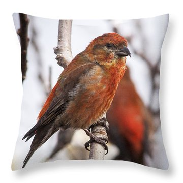 Male Red Crossbills Throw Pillow by Robert Potts