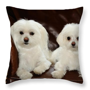 Maltese - Spa Day Throw Pillow by Mike Hendren